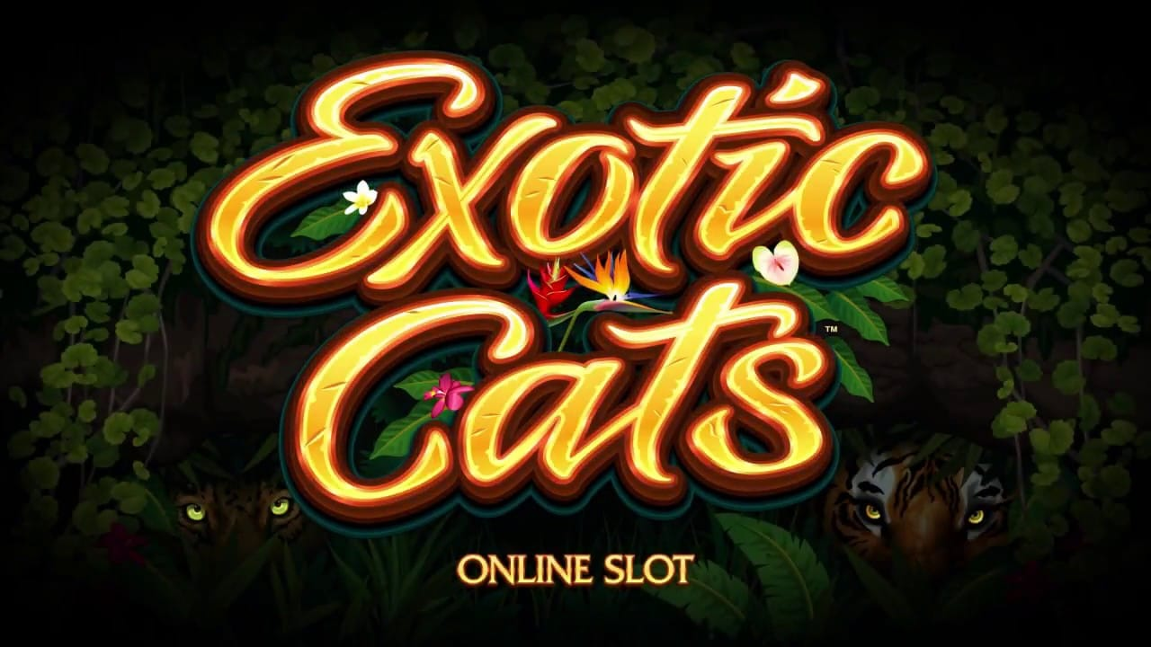 exotic cats slots spins